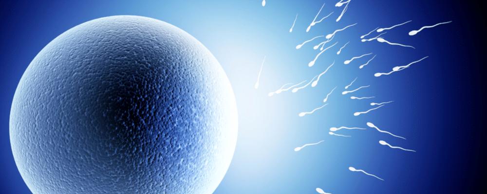 精子活力不足怎么回事 精子活力不足怎么办 如何提高精子活力